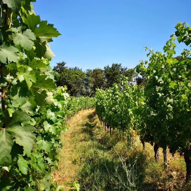 Villa Saletta never stops between vineyards and agricultural activities