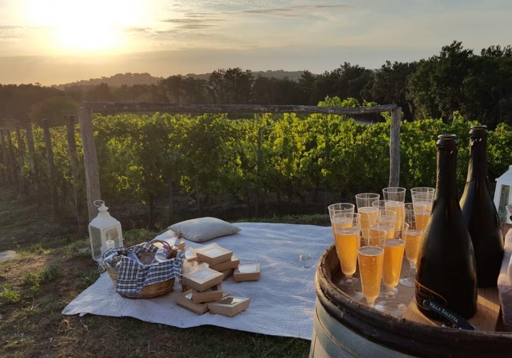 """Pic Nic at """"Torrino"""" vineyard"""