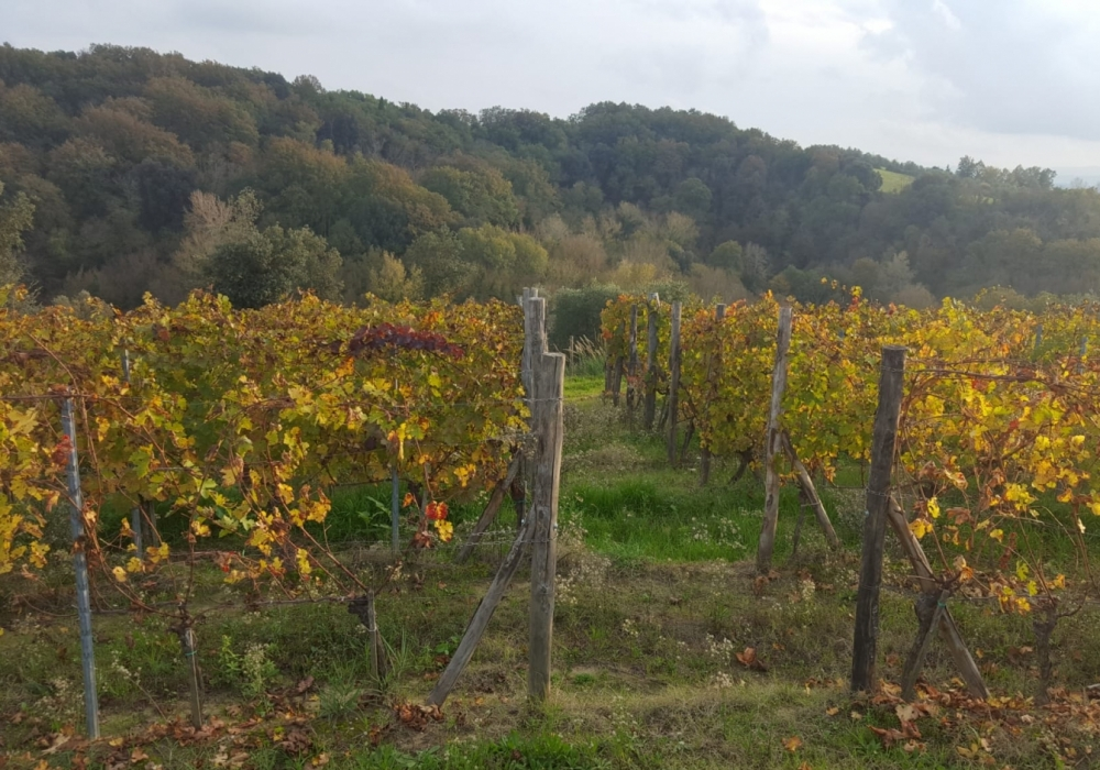 Autumn in wine!